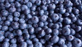 Fondo della frutta del mirtillo Fotografia Stock