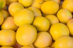 Fondo della frutta del pompelmo Gruppo dell'agrume Di mercato Immagine Stock Libera da Diritti