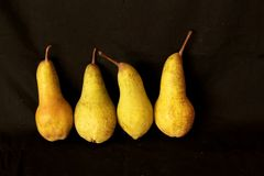 Fondo della frutta del raccolto delle pere Pere organiche fresche Pere saporite succose del raccolto di autunno della pera su fon Immagini Stock