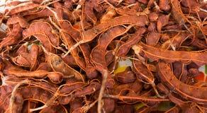 Fondo della frutta del tamarindo Fotografie Stock Libere da Diritti