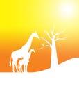 Fondo della giraffa Fotografie Stock