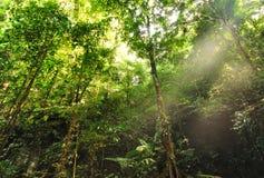 Fondo della giungla Fotografia Stock