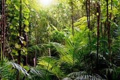Fondo della giungla, Krabi, Tailandia Immagine Stock