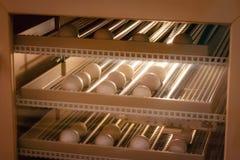 Fondo della macchina dell'incubatrice dell'uovo Uovo dell'uccello con la covata nell'azienda agricola fotografie stock