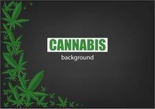 Fondo della marijuana o della cannabis Foglia verde della pagina Fondo verde Illustrazione realistica di vettore illustrazione di stock