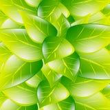 Fondo della molla a lamelle di foglie verdi Immagine Stock Libera da Diritti