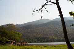 Fondo della montagna di vista del lago Fotografia Stock