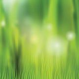 Fondo della natura con erba e bokeh vaghi Fotografia Stock