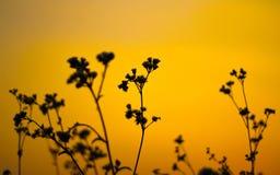 fondo della natura con erba ed il tramonto Fotografia Stock
