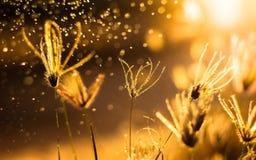 fondo della natura con erba ed il tramonto Fotografie Stock