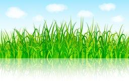 Fondo della natura con erba verde e cielo blu Fotografia Stock Libera da Diritti