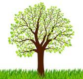 Fondo della natura con erba verde e l'albero Fotografia Stock Libera da Diritti