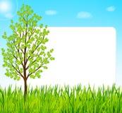 Fondo della natura con erba verde, l'albero ed il cielo blu Fotografia Stock