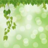 Foglie fresche di verde sul fondo del bokeh Fotografia Stock Libera da Diritti