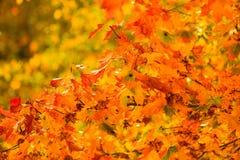 Fondo della natura degli alberi di caduta delle foglie di autunno Fotografia Stock Libera da Diritti