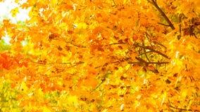 Fondo della natura degli alberi di caduta delle foglie di autunno Fotografia Stock