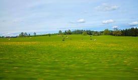 Fondo della natura dell'estratto del pascolo delle mucche fotografia stock libera da diritti