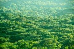 Fondo della natura dell'estratto della foresta dell'albero di verde di vista superiore fotografia stock libera da diritti