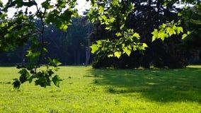 Fondo della natura della lampadina dei rami di albero di estate archivi video
