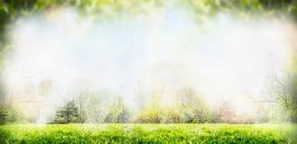 Fondo della natura di estate o della primavera con gli alberi ed il prato inglese Immagine Stock