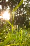 Fondo della natura di mattina del color field di verde di erba incorniciato dalle foglie verdi Fotografie Stock Libere da Diritti