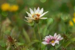 Fondo della natura, fiori Fotografia Stock