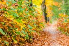 Fondo della natura della foresta di autunno L'autunno, sentiero nel bosco di caduta di rosso va verso luce immagini stock