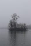 Fondo della natura: Isola spettrale ed albero fotografie stock