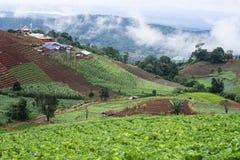 fondo della nuvola del paesaggio di vista di agricoltura bello Fotografia Stock Libera da Diritti