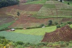 fondo della nuvola del paesaggio di vista di agricoltura bello Immagine Stock Libera da Diritti
