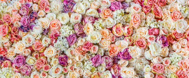 Fondo della parete dei fiori con lo stupore delle rose rosse e bianche, decorazione di nozze, fatta a mano Fotografia Stock