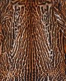 Fondo della pelle del leopardo Fotografie Stock