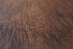 Fondo della pelle di capra Fotografia Stock Libera da Diritti