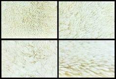 Fondo della pelle di pecora della raccolta, insieme 4 Fotografie Stock