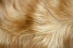 Fondo della pelliccia del cane di Brown Fotografia Stock Libera da Diritti