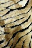 Fondo della pelliccia della tigre Immagini Stock
