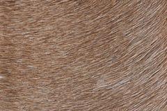 Fondo della pelliccia della lama di Brown Fotografia Stock