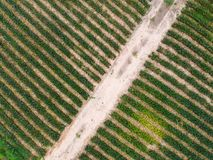 Fondo della piantagione della mela del pino di vista aerea Immagini Stock Libere da Diritti