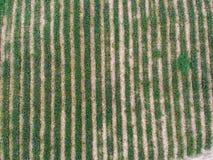 Fondo della piantagione della mela del pino di vista aerea Fotografia Stock