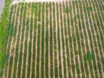 Fondo della piantagione della mela del pino di vista aerea Immagini Stock