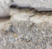 Fondo della pietra grigia della roccia con l'insetto Fotografia Stock