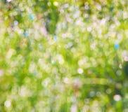 Fondo della primavera Fotografie Stock Libere da Diritti