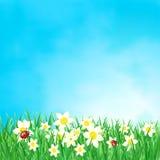 Fondo della primavera Immagini Stock