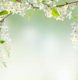 Fondo della primavera Fotografia Stock