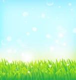 Fondo della primavera con erba Immagini Stock Libere da Diritti