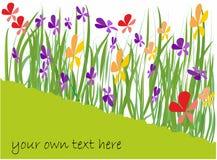 Fondo della primavera con i fiori del colorfull royalty illustrazione gratis