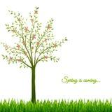 Fondo della primavera con l'albero e l'erba Immagini Stock Libere da Diritti