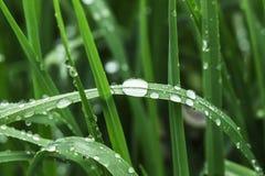 Fondo della primavera, foglie con le gocce di rugiada, fine su fotografia stock