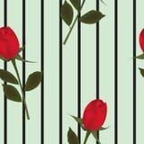 Fondo della rosa rossa, modello senza cuciture Fotografia Stock