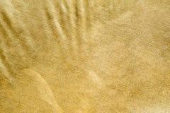 Fondo della scintilla di scintillio dell'oro Fotografie Stock Libere da Diritti